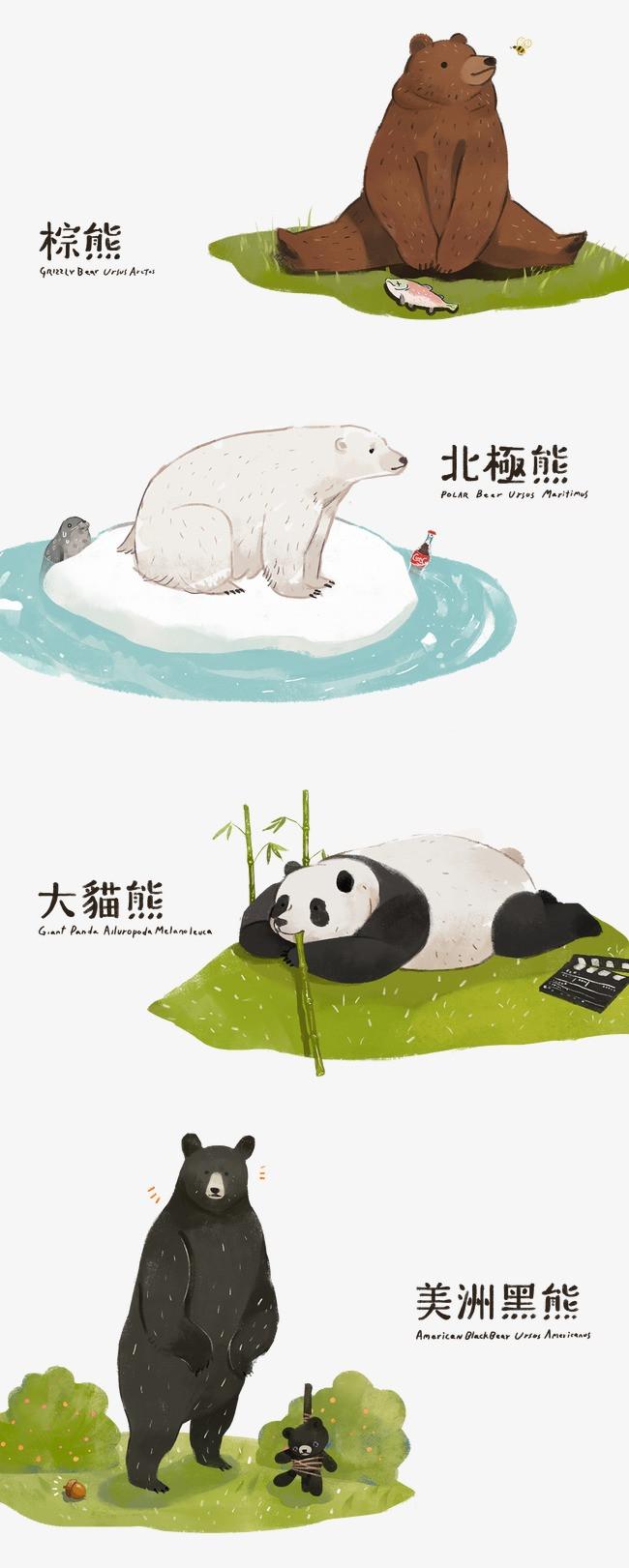 熊类动物分类