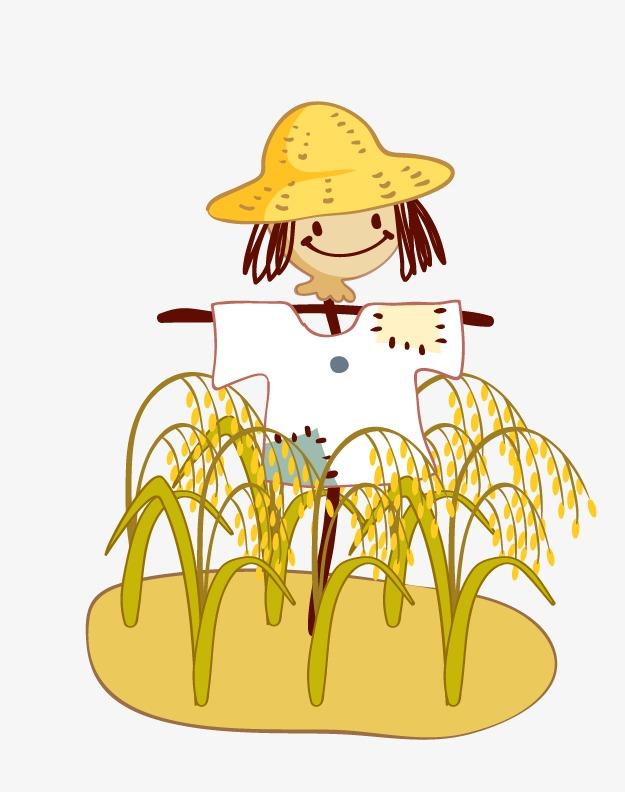 稻谷地里的稻草人图片