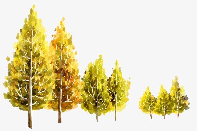 杨树的图片手绘