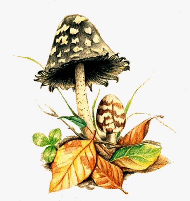 卡通手绘蘑菇
