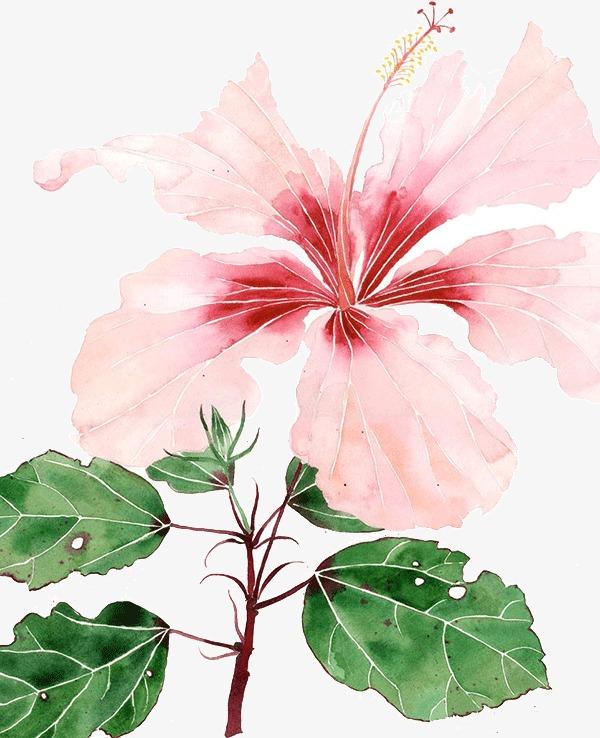 创意水彩花卉