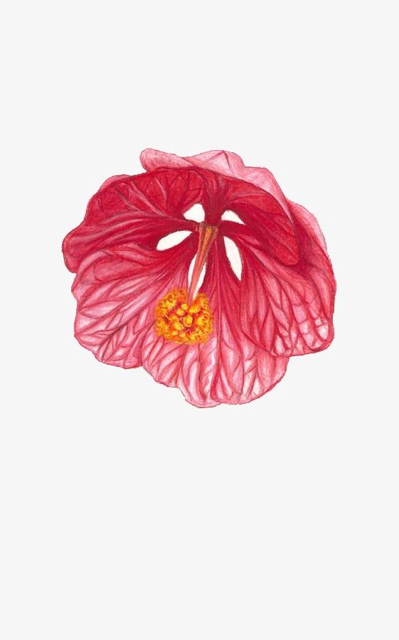 彩铅小花朵手绘
