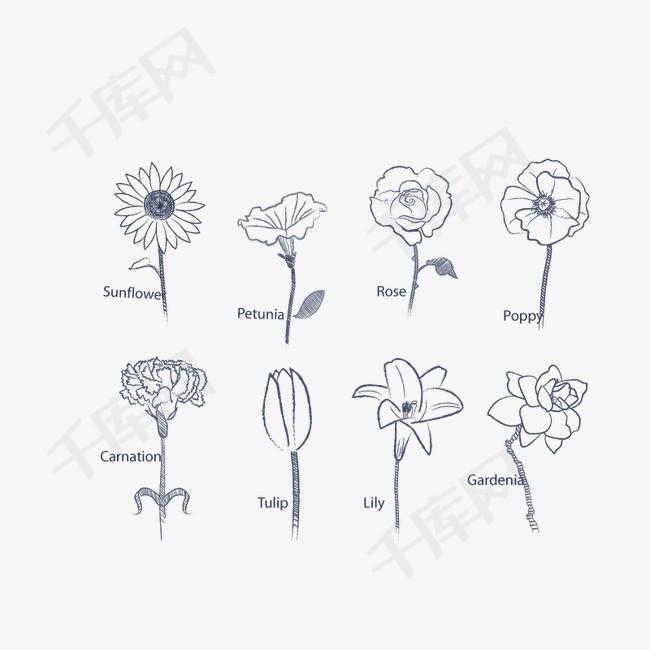 矢量手绘花朵菊花喇叭花玫瑰花简笔画