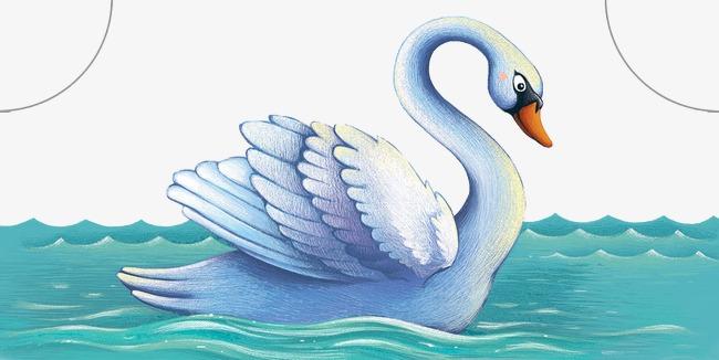 手绘精美天鹅游泳