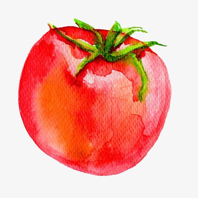 手绘番茄【高清png素材】-90设计