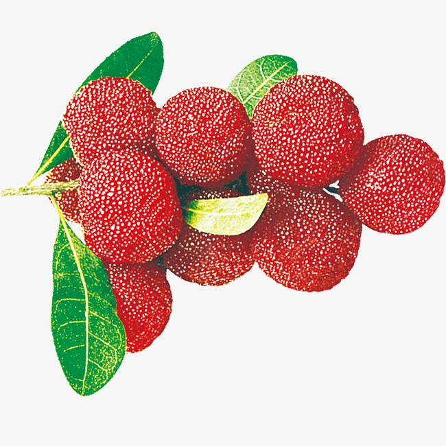 卡通手绘水果杨梅