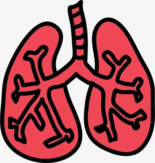 图片 > 【png】 简笔画肺  分类:手绘动漫 类目:其他 格式:png 体积