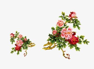 手绘牡丹花