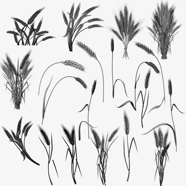 画麦穗步骤图解