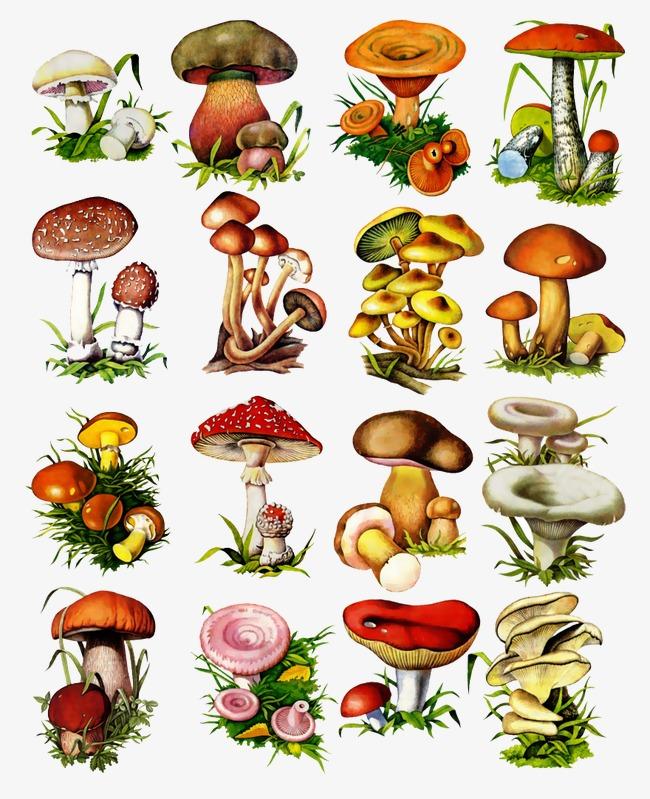 图片 > 【png】 多种蘑菇  分类:手绘动漫 类目:其他 格式:png 体积:0