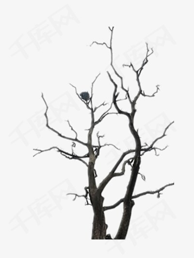 枯树枝素材图片免费下载 高清装饰图案psd 千库网 图片编号4194117