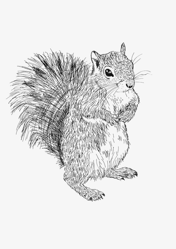 图片 松鼠卡通 > 【png】 松鼠  分类:手绘动漫 类目:其他 格式:png