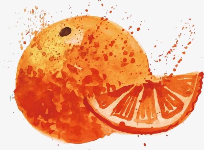 矢量手绘水彩橙子