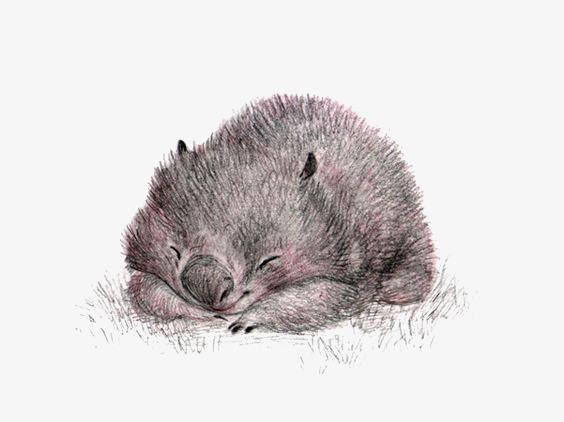 图片 > 【png】 仓鼠  分类:手绘动漫 类目:其他 格式:png 体积:0.