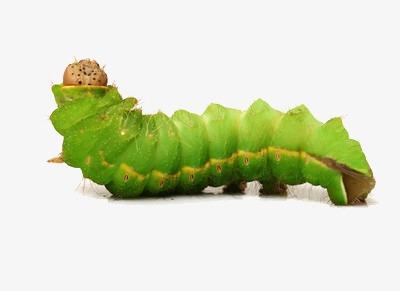 孕妇梦见好多绿色虫子