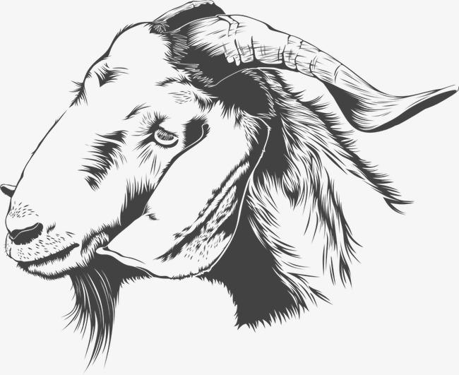 图片 > 【png】 羊头  分类:手绘动漫 类目:其他 格式:png 体积:0.