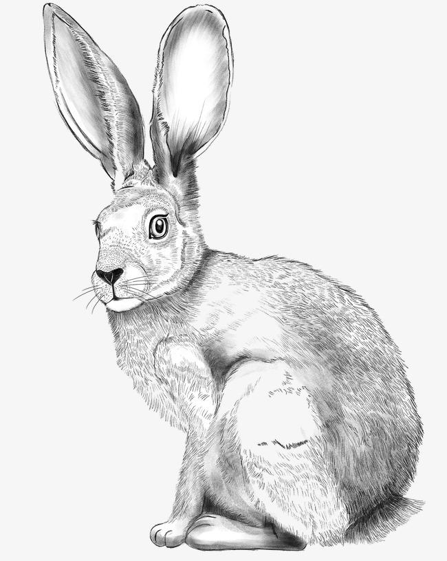 素描兔子素材图片免费下载 高清图片png 千库网 图片编号4392906