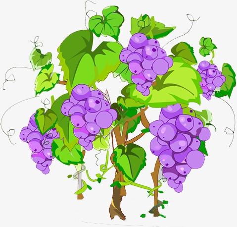 手绘葡萄树