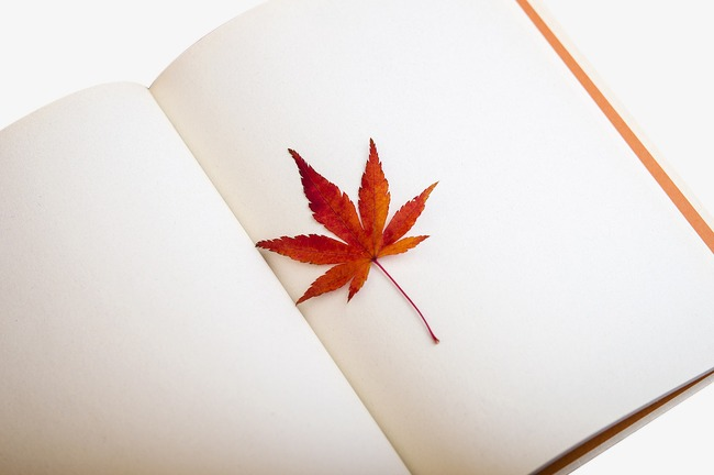 夹在书中的枫叶图片