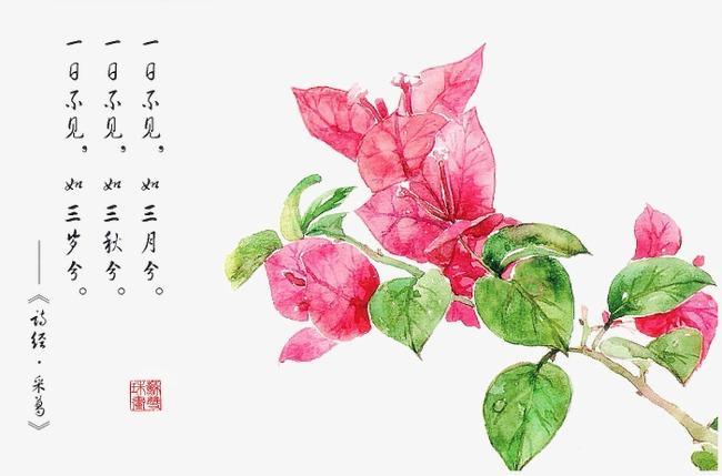 诗经花朵插画配图素材图片免费下载 高清卡通手绘png 千库网 图片编图片
