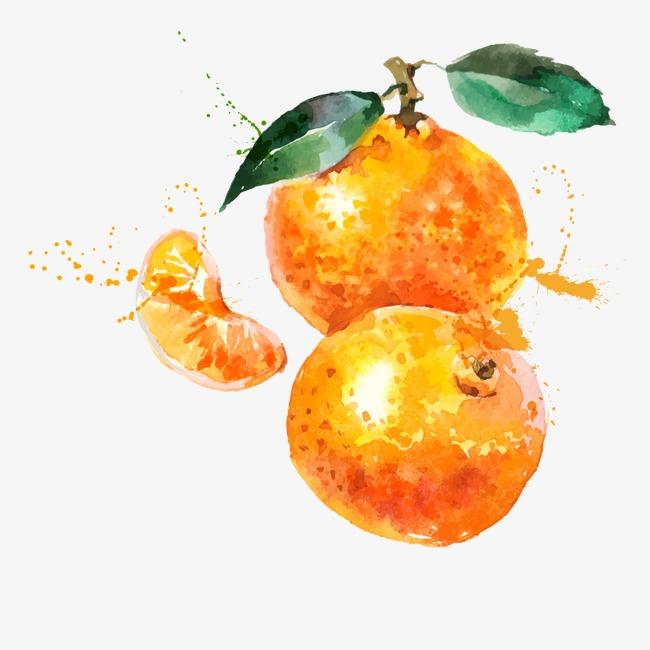 矢量手绘水彩橘子