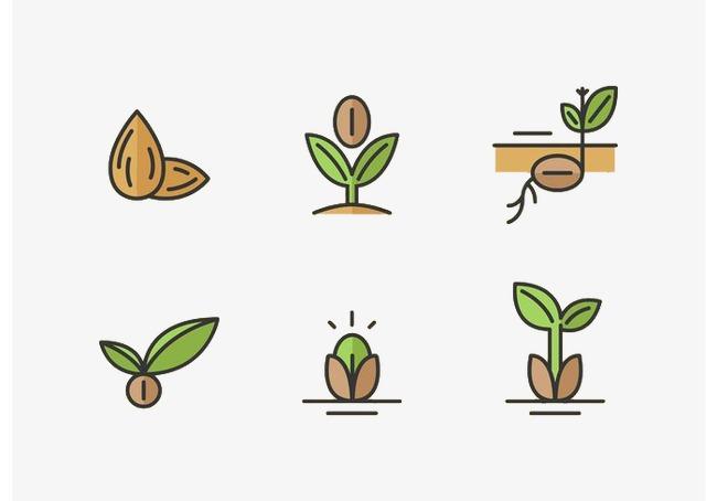 种子_种子的生长