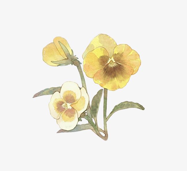 图片 > 【png】 黄花  分类:手绘动漫 类目:其他 格式:png 体积:0.