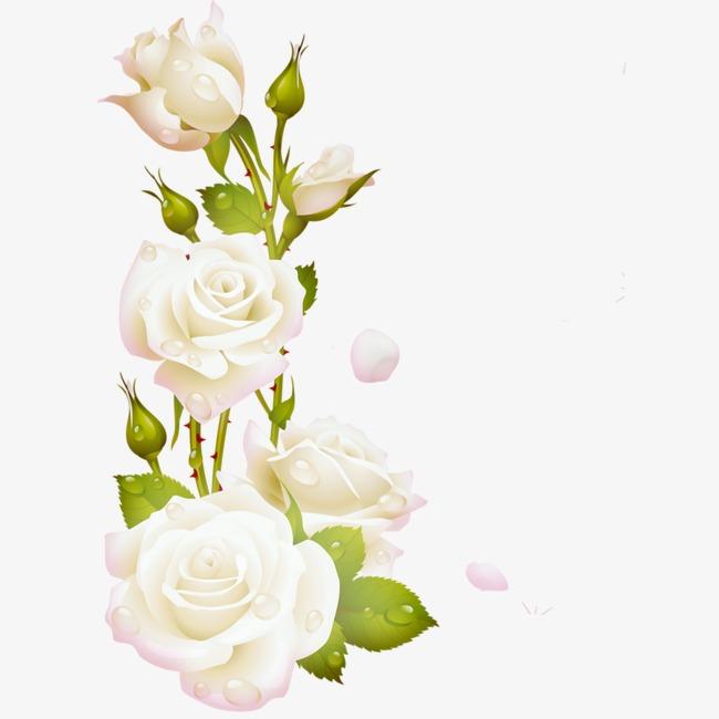 图片 > 【png】 月季花  分类:手绘动漫 类目:其他 格式:png 体积:0.