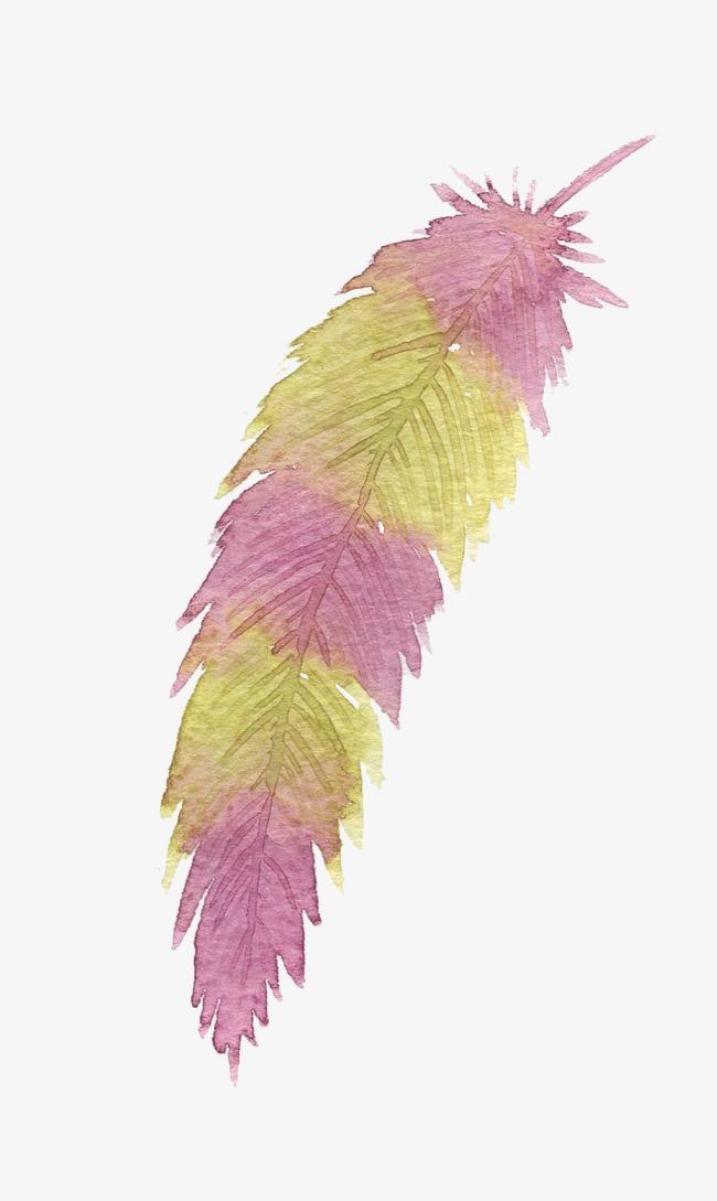 水粉手绘羽毛