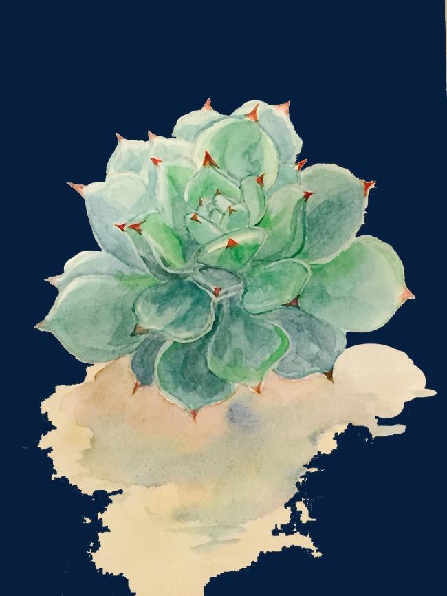图片 多肉植物 > 【png】 多肉植物  分类:手绘动漫 类目:其他 格式