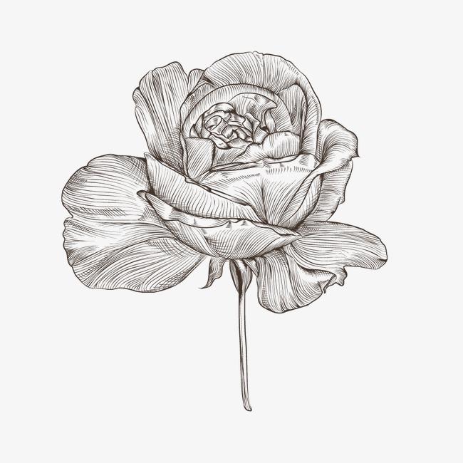 黑白手绘玫瑰花