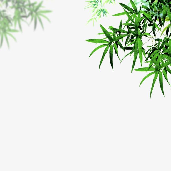 竹子景观马克笔手绘