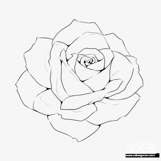 Line Art Design Kft : 手绘的玫瑰花线稿素材图片免费下载 高清装饰图案png 千库网 图片编号