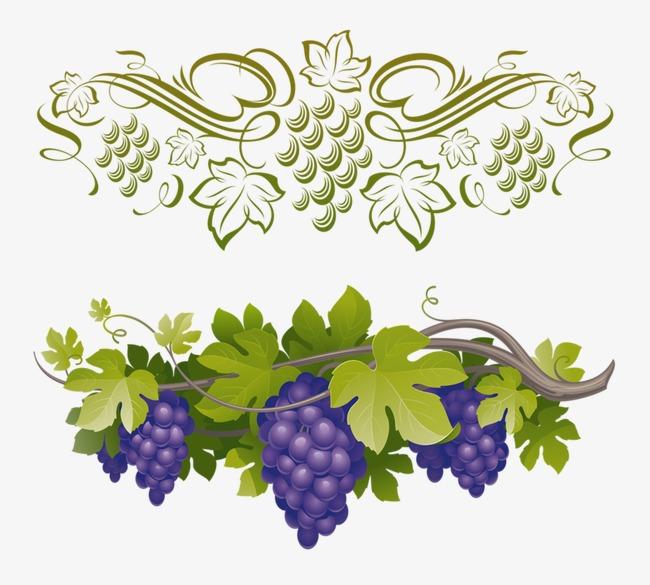 创意 卡通 手绘 紫色 葡萄 水果             此素材是90设计网官方