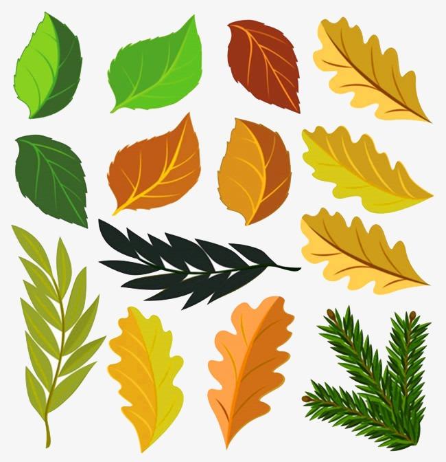 图片 装饰元素 > 【png】 卡通树叶叶子图片