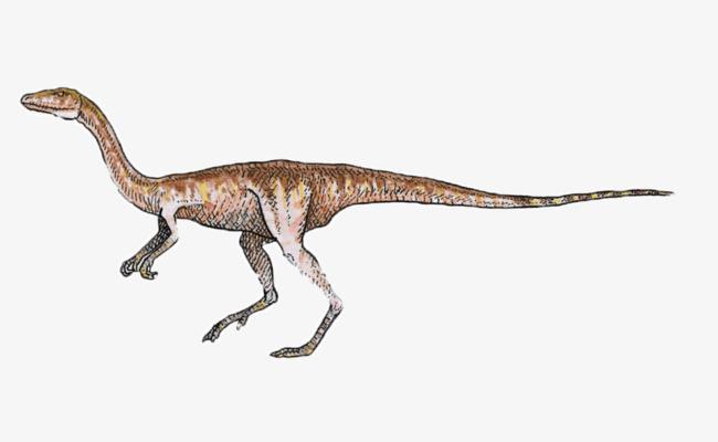 恐龙 手绘 灭绝动物 疙瘩 棕色 黄色             此素材是90设计网
