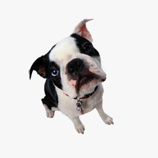 图片 卡通动物 > 【png】 动物  分类:产品实物 类目:其他 格式:png
