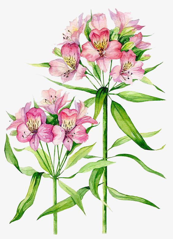 图片 卡通植物 > 【png】 植物  分类:手绘动漫 类目:其他 格式:png
