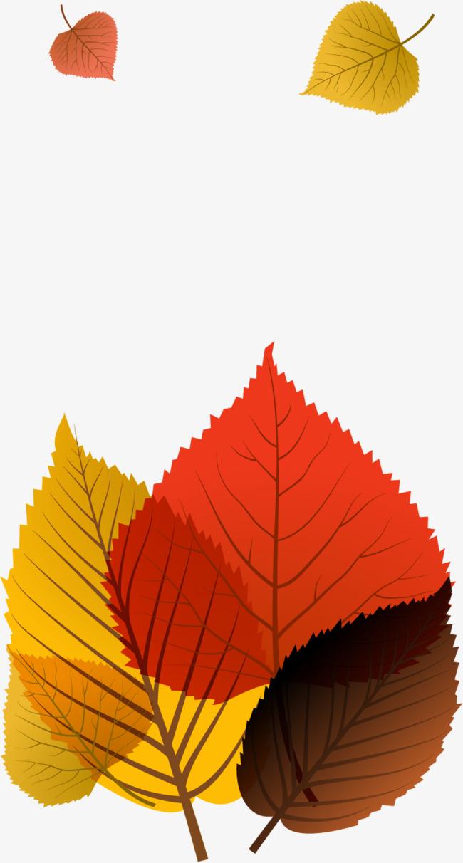 矢量手绘秋季落叶