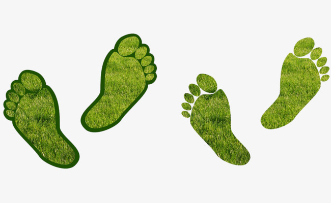 画各种动物的脚印