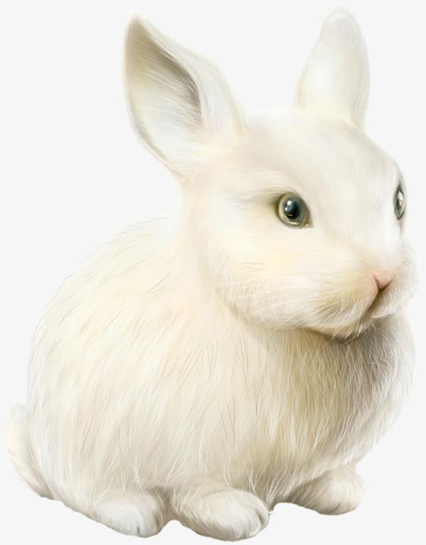 点击右侧免费下载按钮可进行 小兔子动物png图片素材高速下载.