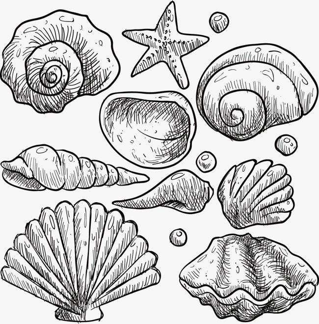矢量手绘五角星海螺壳贝壳