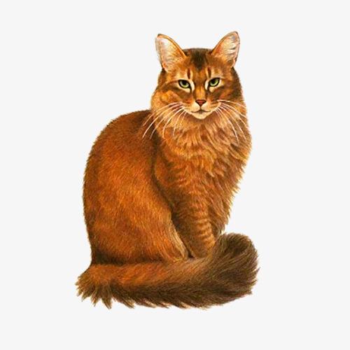 卡通手绘猫咪坐着