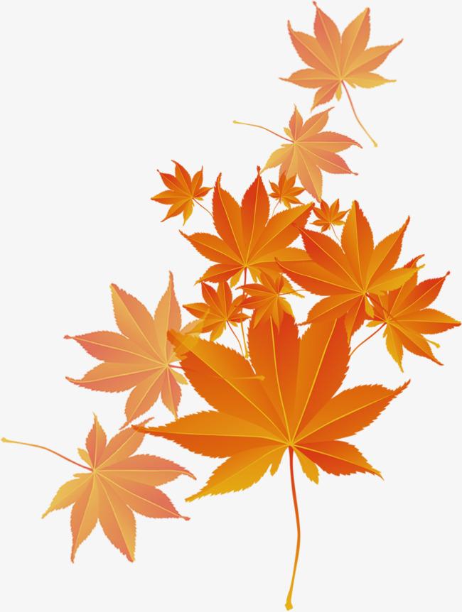 唯美枫叶飘落png素材-90设计图片