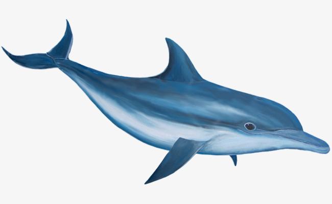 手绘蓝色海豚