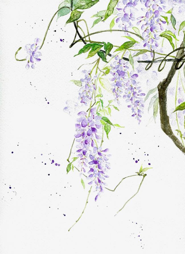 手绘紫藤花
