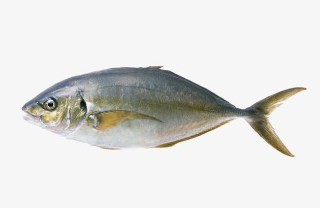 壁纸 动物 鱼 鱼类 650_423