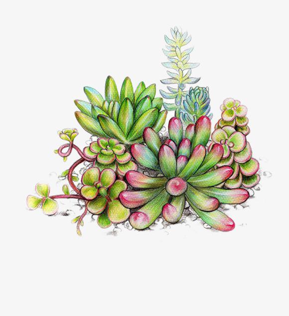 简单好看彩铅植物画 步骤