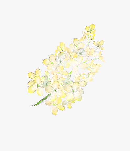 彩色手绘的黄花