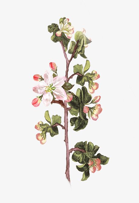 彩铅手绘漂亮花